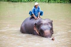 Bains de Mahout son éléphant Photo libre de droits
