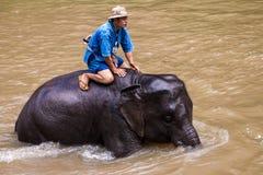 Bains de Mahout son éléphant Photos stock