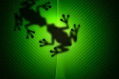 Baiser d'amour de grenouille Image stock