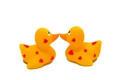 Baiser de deux canards Photographie stock