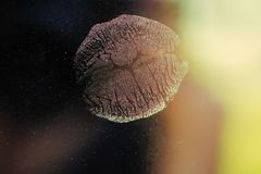 Baiser de femme ou de fille, lèvres sexy Photos libres de droits