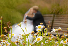 Baiser du marié et de la mariée Photos stock
