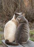 Baiser mignon de deux chats tout en se reposant à côté d'un banc en bois, dans la campagne, contre le contexte du buisson au prin photos stock
