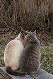 Baiser mignon de deux chats tout en se reposant ? c?t? d'un banc en bois, dans la campagne, contre le contexte du buisson au prin images stock