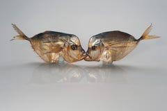 Baiser, plaisanterie de photo : deux poissons fumés embrassant dans la bouche sur un fond blanc Photo libre de droits