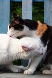 Baisers de chats Images libres de droits