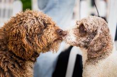 Baisers de deux chiens image libre de droits