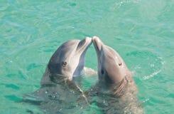 Baisers de deux dauphins Photos libres de droits