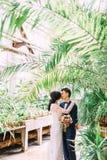 Baisers des couples de nouveaux mariés au-dessus des feuilles du palmier Vue verticale Photo libre de droits
