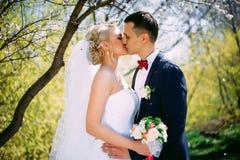 Baisers du portrait de plan rapproché de nature de couples de mariage au printemps Kissi Image libre de droits