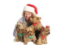Baisers et chaos de Noël Photographie stock libre de droits