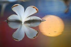Baisse de fleur sur l'eau Images libres de droits