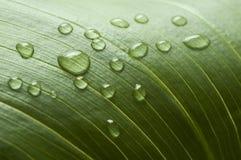 Baisse de l'eau d'une lame Image stock