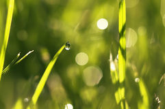 Baisse de l'eau dans l'herbe Photo libre de droits