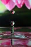Baisse de l'eau de lis d'eau Image libre de droits