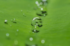 Baisse de l'eau de pluie sur la feuille verte Image libre de droits