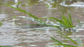 Baisse de l'eau sur l'herbe dans le jour pluvieux banque de vidéos