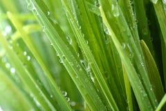 Baisse de l'eau sur l'herbe verte Photo libre de droits