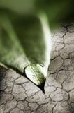 Baisse de l'eau sur la feuille verte Photos stock