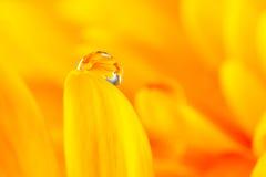 Baisse de l'eau sur la fleur Photos libres de droits