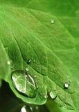 Baisse de l'eau sur la lame Photographie stock