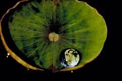 Baisse de l'eau sur la lame de lotus. photos libres de droits