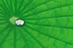 Baisse de l'eau sur la lame de lotus Photos libres de droits