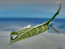 Baisse de l'eau sur la lame verte Photographie stock libre de droits