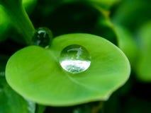 Baisse de l'eau sur la lame verte Image libre de droits