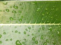 Baisse de l'eau sur la lame verte Photo stock