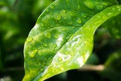 Baisse de l'eau sur la lame verte photo libre de droits