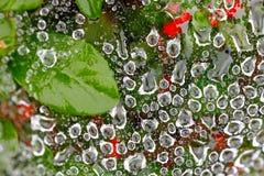 Baisse de l'eau sur la toile d'araignée Images stock