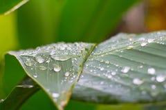 Baisse de l'eau sur le leef vert Images libres de droits