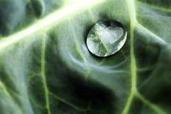 Baisse de l'eau sur une lame verte Image libre de droits