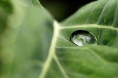 Baisse de l'eau sur une lame verte Photographie stock libre de droits