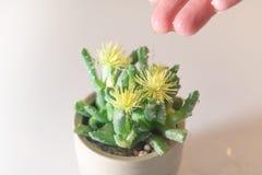 Baisse de main de femmes l'eau au petits arbre/cactus, l'eau pendant la vie, concept de jour de l'eau du monde avec l'espace de c Image stock
