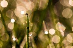 Baisse de rosée Photographie stock libre de droits