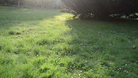 Baisse de rosée d'herbe banque de vidéos