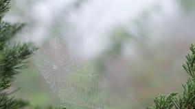 Baisse de rosée de plan rapproché sur le Web du ` s d'araignée Photo libre de droits