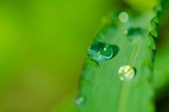 Baisse de rosée sur un pétale d'herbe Photo libre de droits