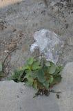 Baisse de sachet en plastique sur la terre Image stock