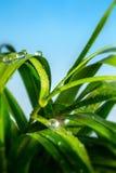 Baisse des eaux sur l'herbe photos libres de droits