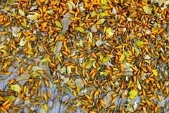 Baisse orange de fleur sur le plancher Photos libres de droits