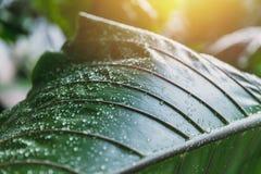 Baisse verte fraîche de l'eau de pluie de nature Photographie stock