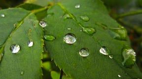Baisses argentées de l'eau sur le vert image libre de droits