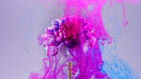 Baisses colorées tombant sur une belle fleur blanche illustration libre de droits