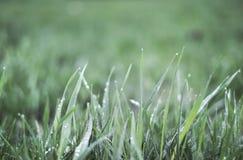 Baisses d'herbe verte et d'eau après pluie Photo libre de droits