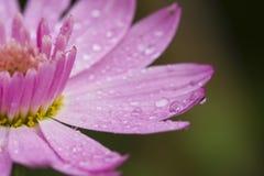 Baisses dans les fleurs Images libres de droits