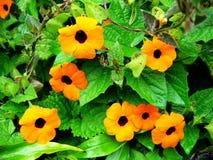 Baisses de fleur image libre de droits