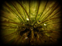 Baisses de l'eau Image libre de droits